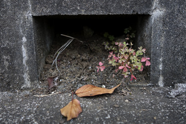141002_natural_planter.jpg
