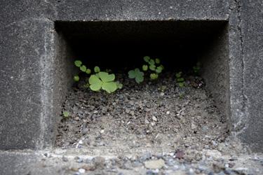 141002_natural_planter_b.jpg