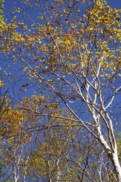 141005_autumn_trees.jpg