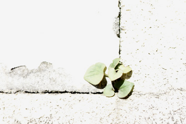 141112_natural_planter.jpg