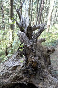 141113_tree_art.jpg