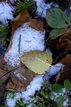 141124_frost.jpg