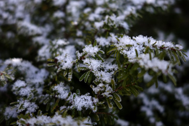 141209_first_snow.jpg