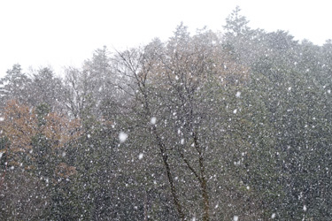 141216_snow.jpg