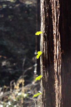 141229_leaves.jpg