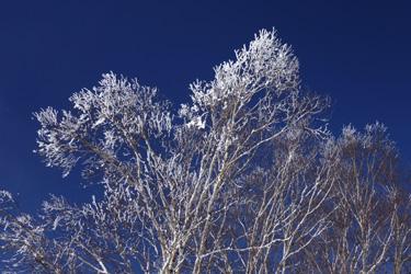 150118_snow_tree.jpg