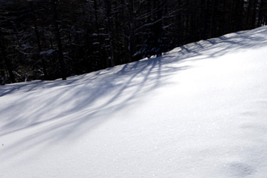 150126_shining_snow.jpg