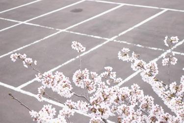 150402_sakura_parking.jpg