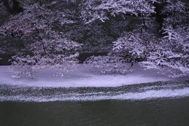 150407_sakura_stream.jpg