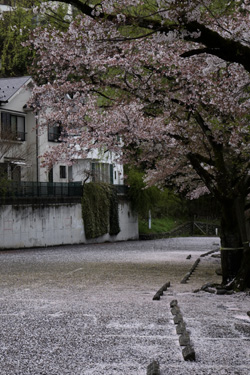 150412_sakura_parking.jpg