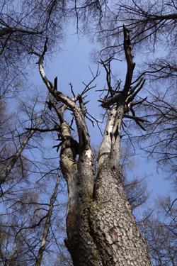 150425_tree.jpg