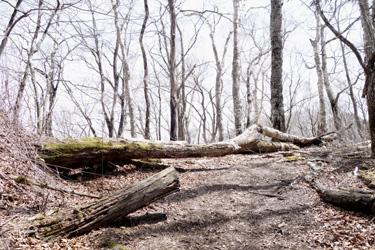 150427_forest.jpg