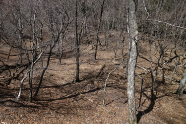150428_forest.jpg