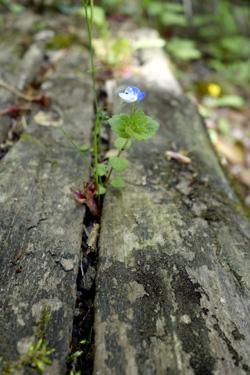 150430_natural_planterb.jpg