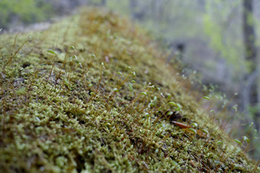 150501_small_forest.jpg