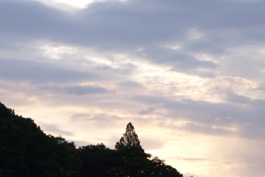 150503_tree.jpg