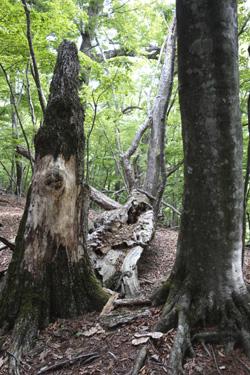 150523_dead_tree.jpg