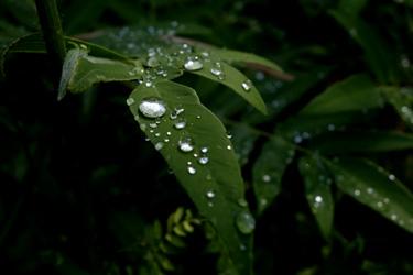 150524_rain_drops.jpg