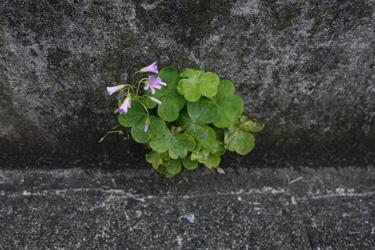 150603_natural_planter.jpg