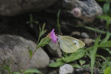 150604_butterfly.jpg
