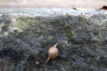 150613_snail.jpg