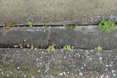 150630_natural_planters.jpg