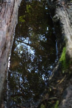 150720_puddle.jpg