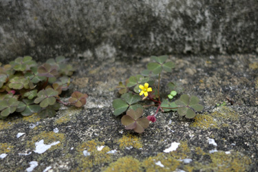 150721_small_flower.jpg