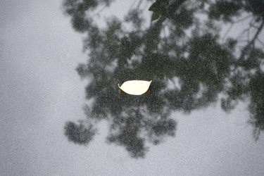 150802_floating_leaf.jpg