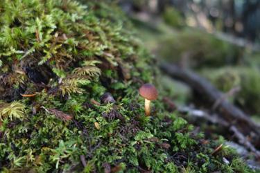 150803_mushroom.jpg
