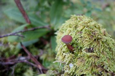 150805_mushroom.jpg