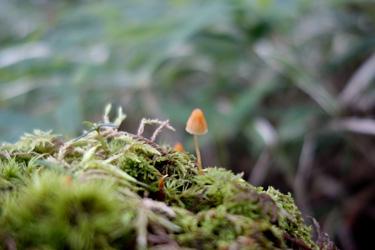 150809_mushroom.jpg