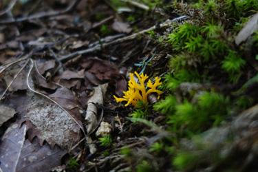 150810_mushroom.jpg