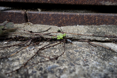 150816_natural_planter.jpg