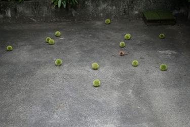 150825_chestnuts.jpg