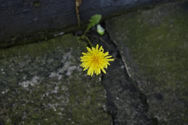 150828_natural_planter3.jpg