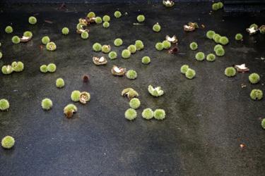 150830_chestnuts.jpg