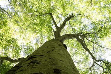 150907_forest_roof.jpg