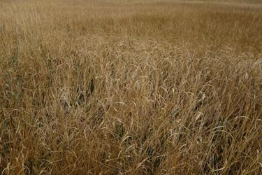 150908_autumn_grass.jpg