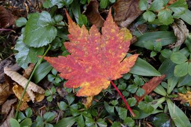 150910_autumn_leaf.jpg