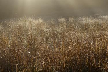 150912_grass_field.jpg