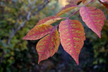 150914_autumn_leaves.jpg