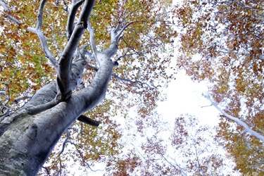 150917_forest_roof.jpg