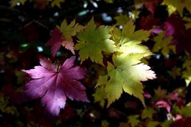 150924_autumn_leaves.jpg