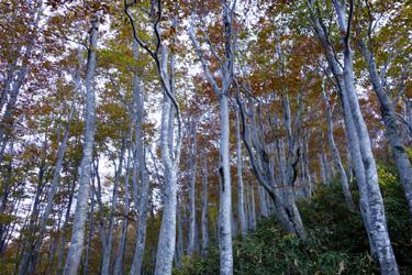 151002_autumn_forest.jpg