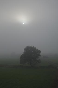 151010_fog.jpg