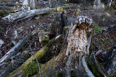 151014_dead_trees.jpg