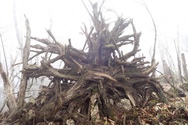 151016_tree_art.jpg