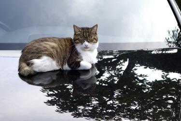 151017_cat.jpg