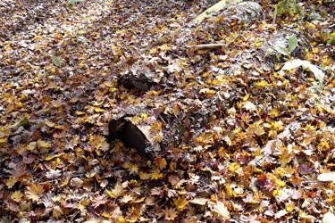 151019_follen_dead_leaves.jpg